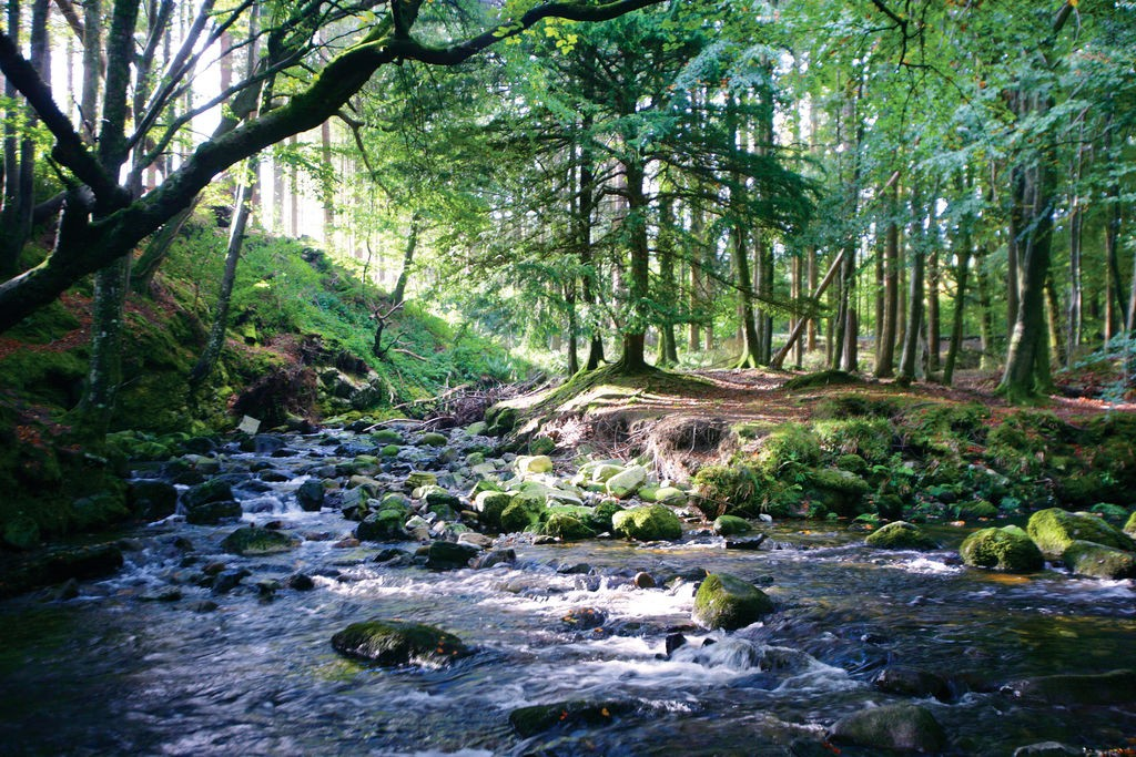 Tollymore Forest Park, Co. Down