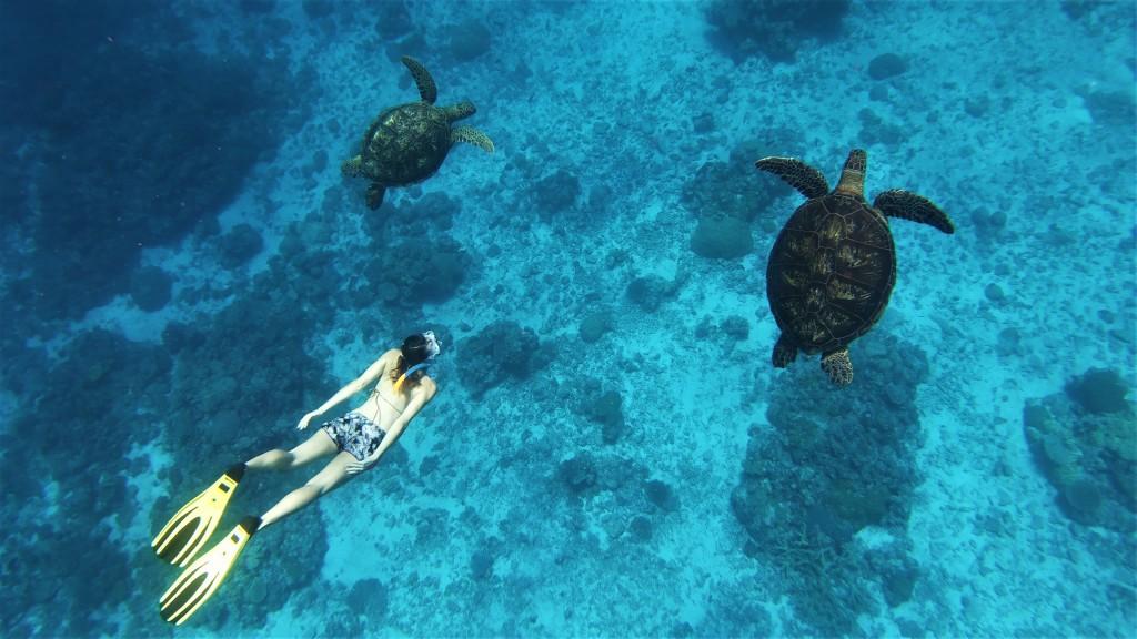 Deux belles tortues (1)-5