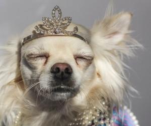 Dog princess luxury