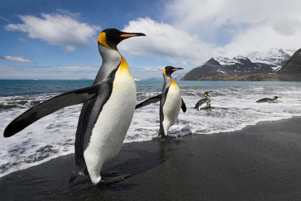 antarctica_earlybird