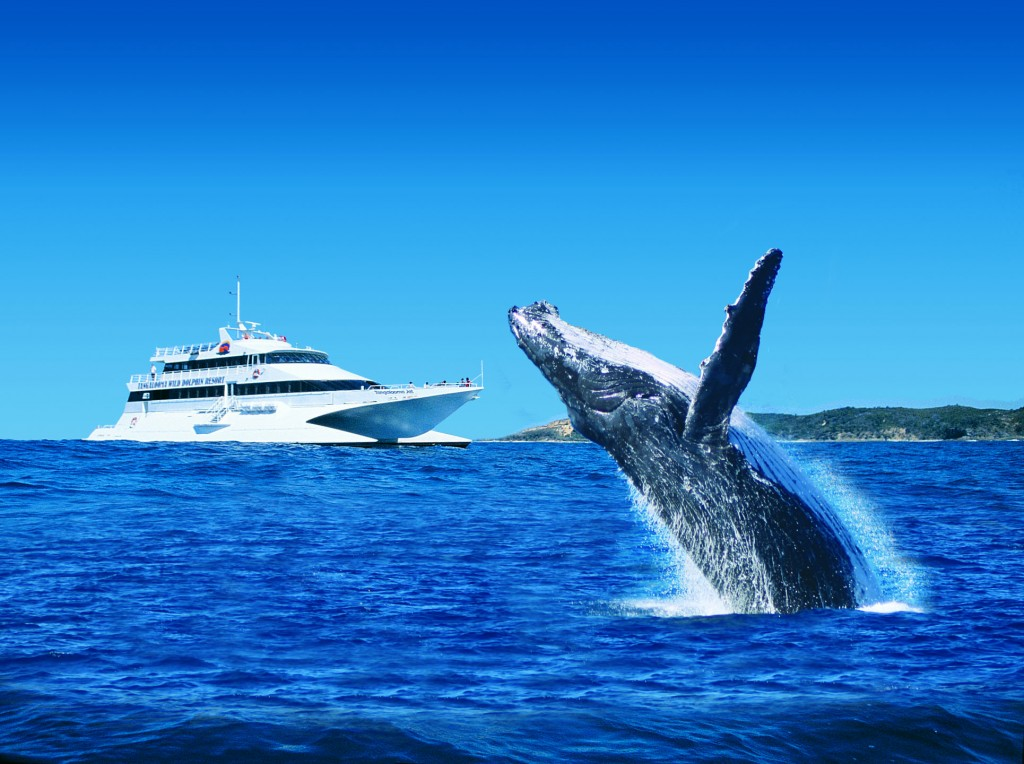 Tangalooma Whale Watching HERO IMAGE