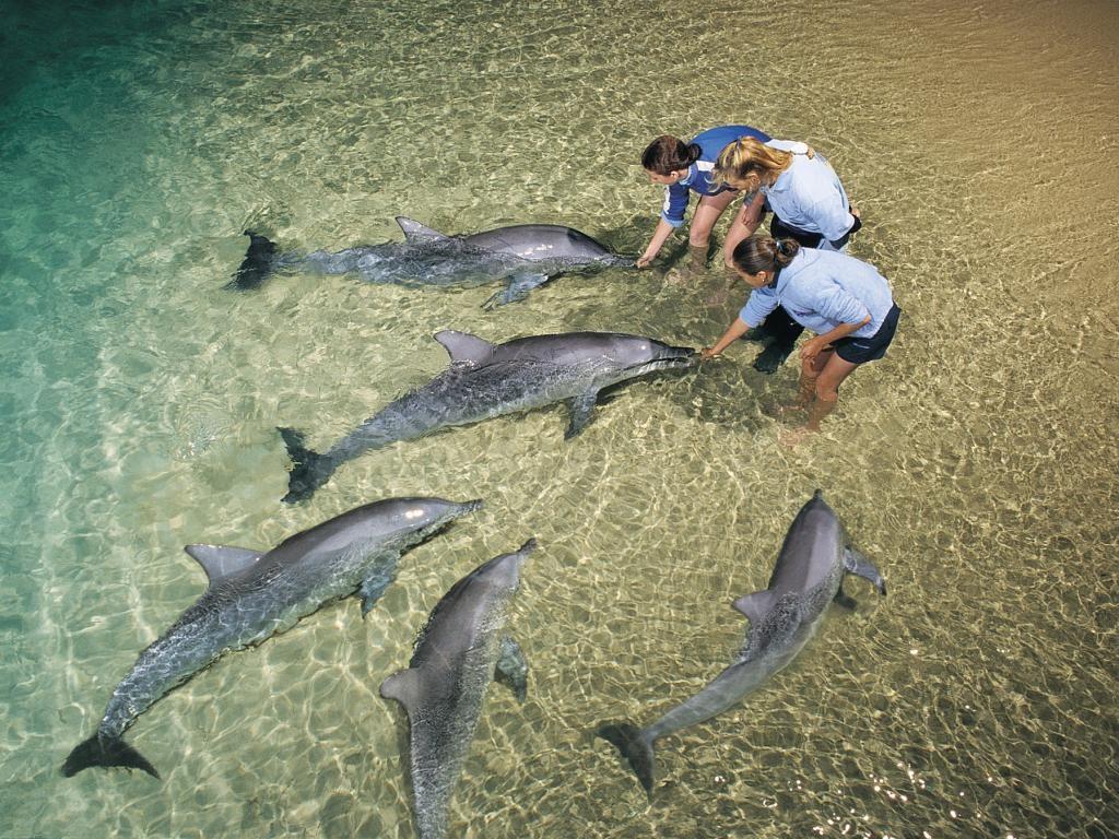 dolphin-feeding-9362-crop