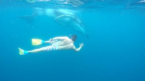 ian-and-humpback-in-tonga