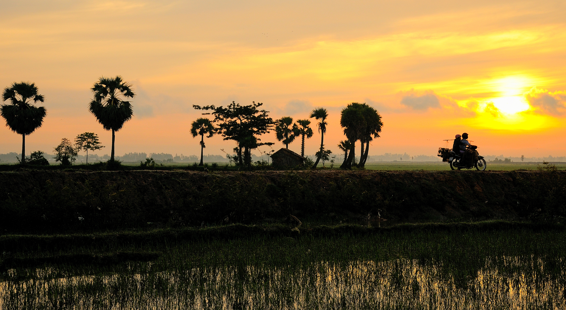 Sunrise over rice paddy in Mekong Delta, An Giang, Vietnam
