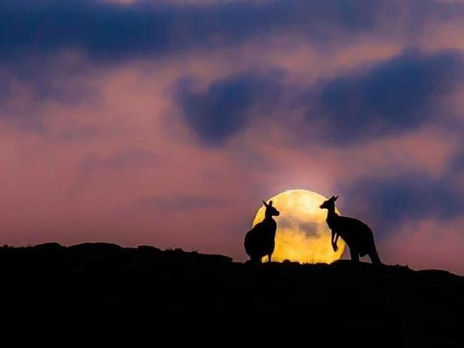 Margaret River Discovery Comapny's 'Sunset Kangaroos' post was judged the best photograph on social media by Tourism Australia and Qantas. Picture: Sean Blocksidge