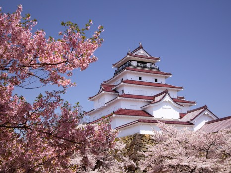 Cherry-blossom-and-castle--Bucket-List-279851450458120