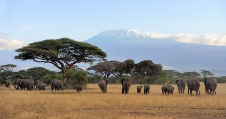 TANZANIA_elephants_shutterstock_301159061