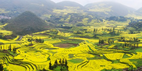 """""""Village and Rapeseed Field - Luoping, Yunnan province, China."""""""