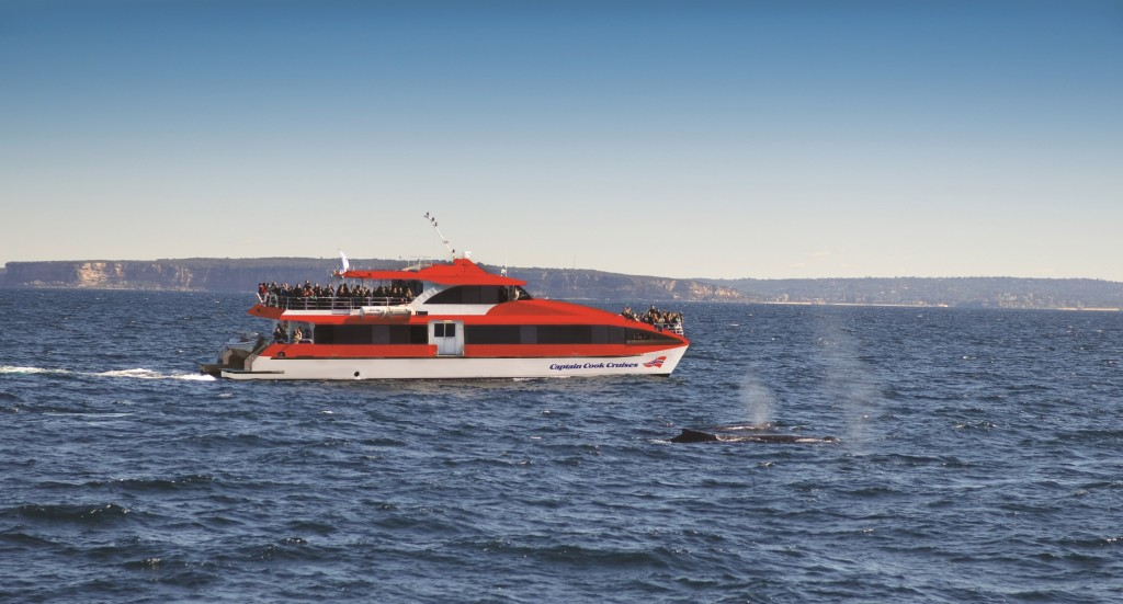 Captain Cook Cruises whale watching cruise