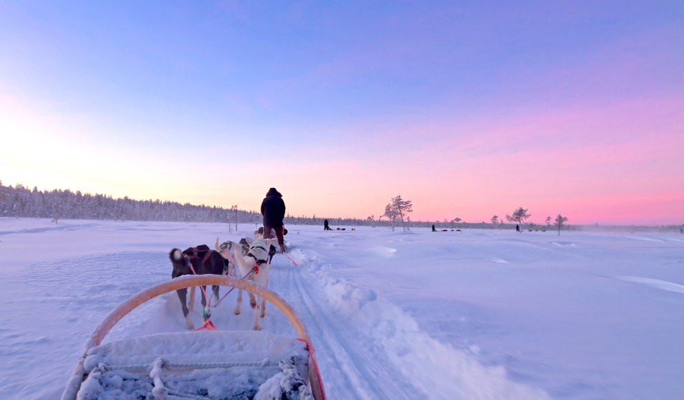 Husky sledge ride at sunset in winter wonderland (Lapland Finland)