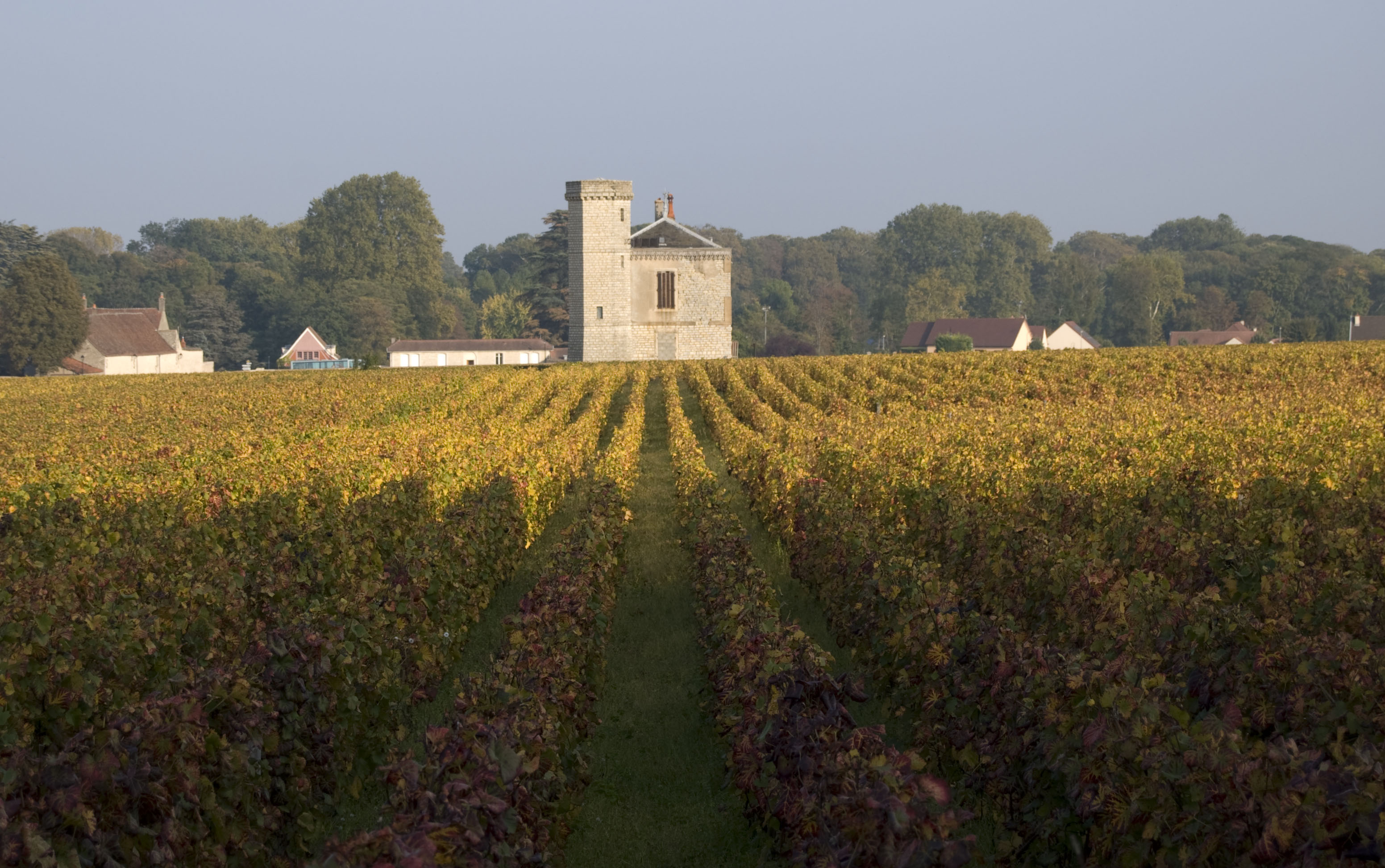 European Waterways_Burgundy Vineyard