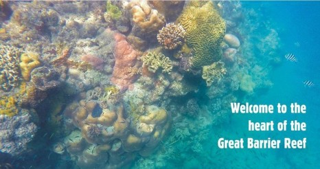 Reef banner_1