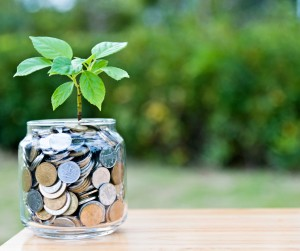 Plant growing from coin jar
