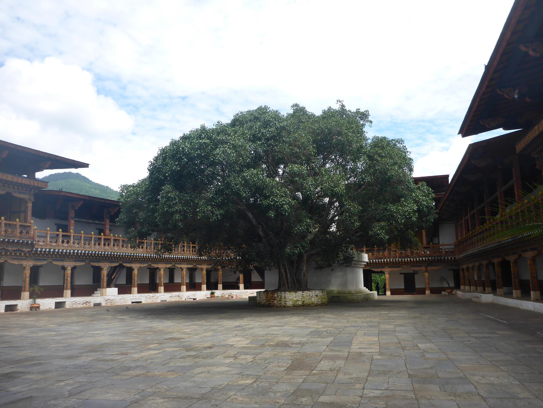 Punakha Dzong_OTG