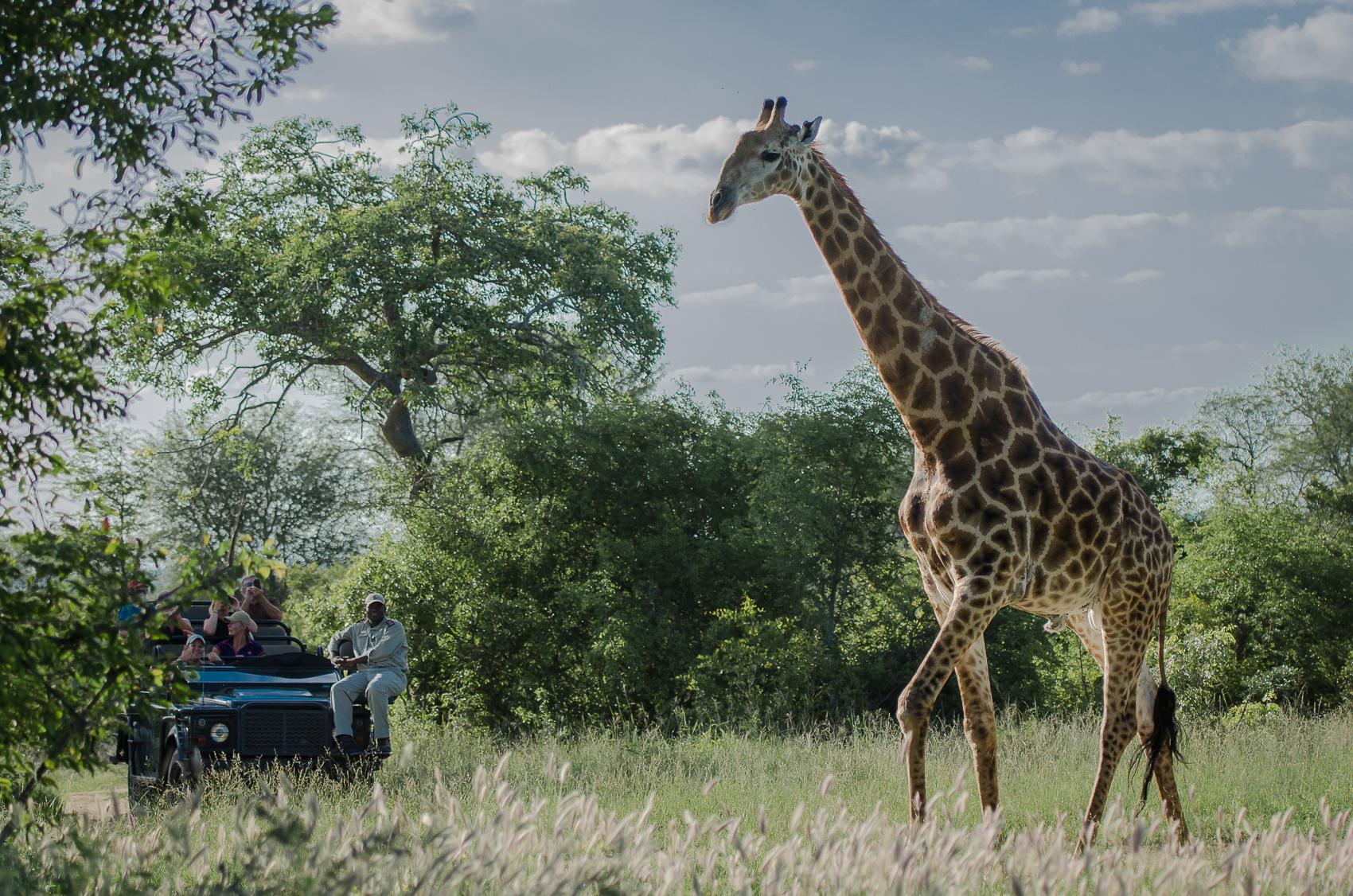 Safari (49)
