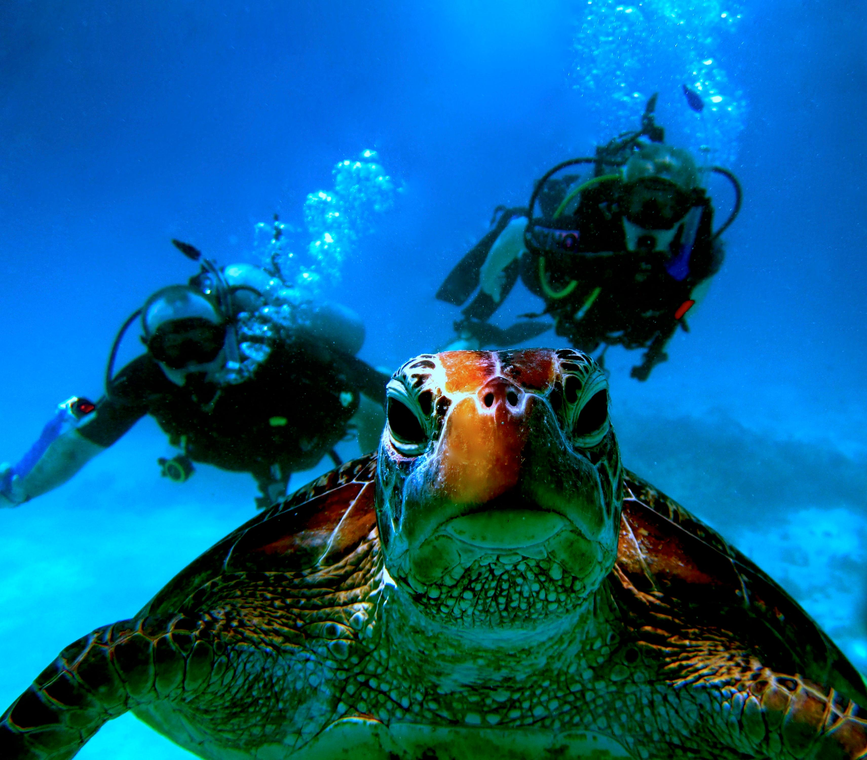 3a. Agincourt Ribbon Reef Dive, Port Douglas