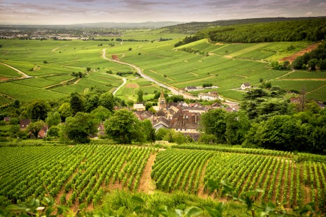 France_Hills_covered_with_vineyards_in_the_wine_region_of_Burgundy_shutterstock_718109089sml