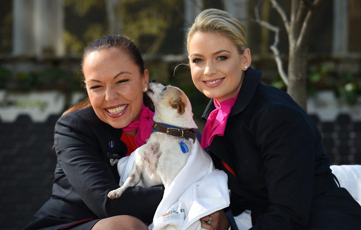 Qantas Gets Behind Travellers And Their Pets Travel Weekly