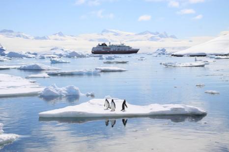 Antarctica, Cuverville Island, 22/11/09
