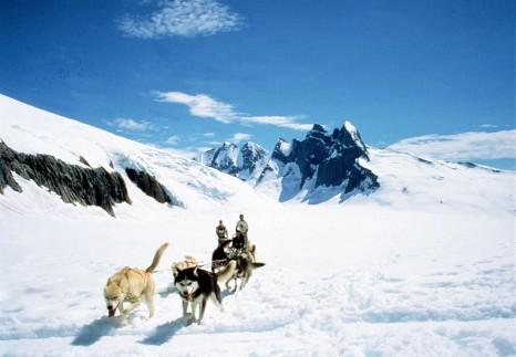 JU43, Juneau, Mendenhall Glacier, Wilderness and Wildlife Tours, Flightseeing, Adventure Tours, dogsled, dogs, wildlife, Destination, Alaska