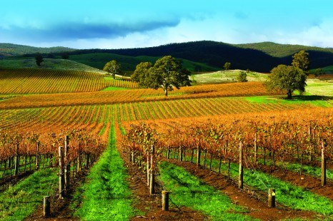 Autumn Vineyard on a stormy day