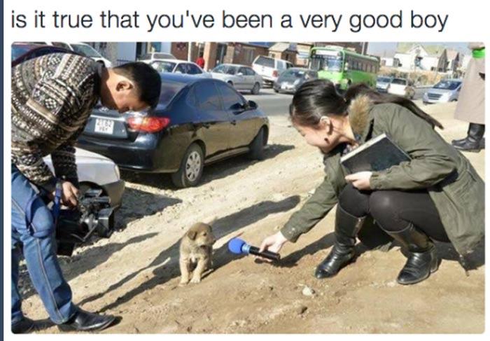 is-it-true-very-good-boy