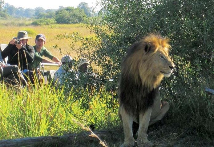 1603-africa-safari-lion-fb