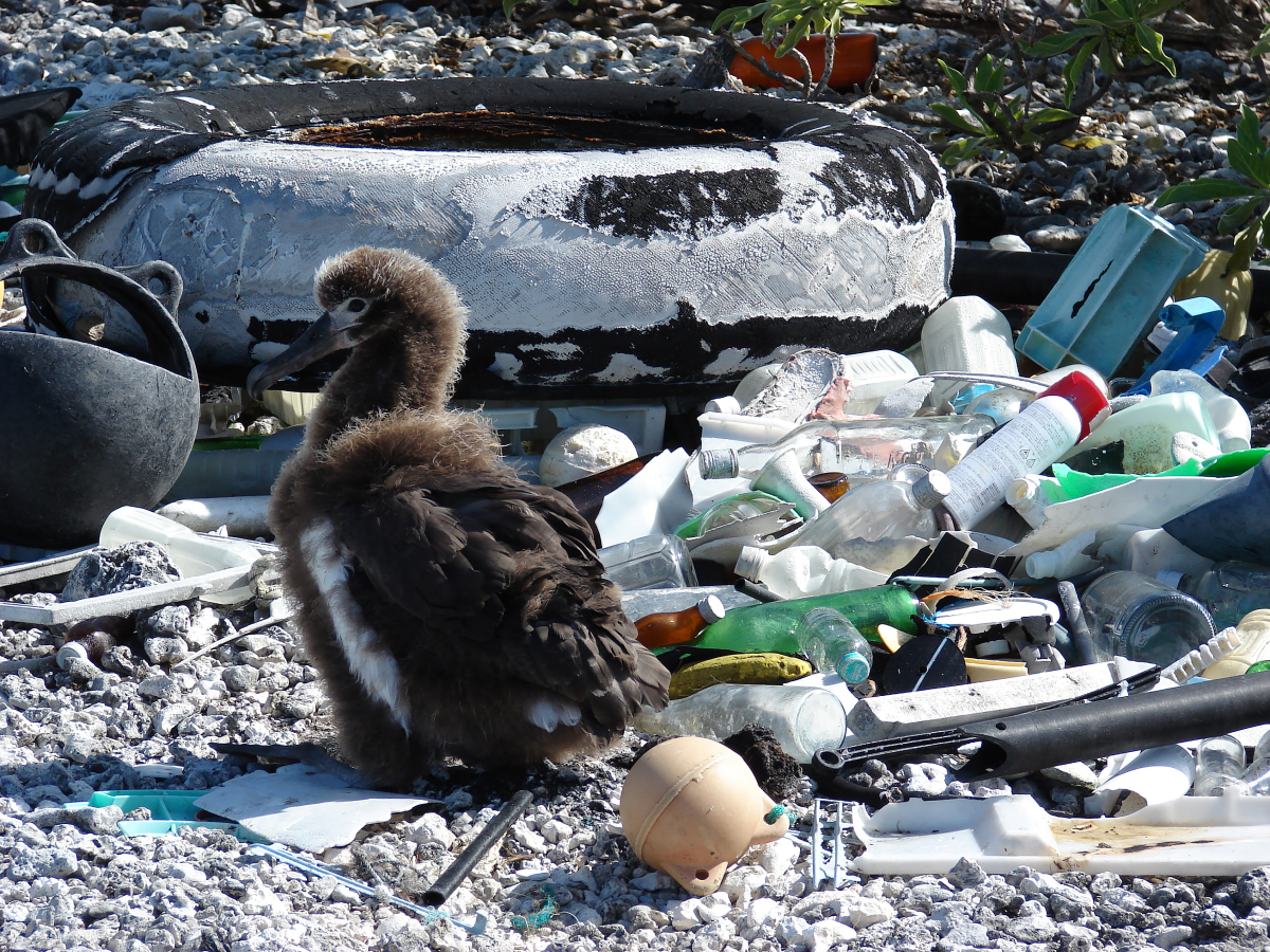 An estimated eight million tonnes of plastic pollution pour into our oceans annually, impairing 2