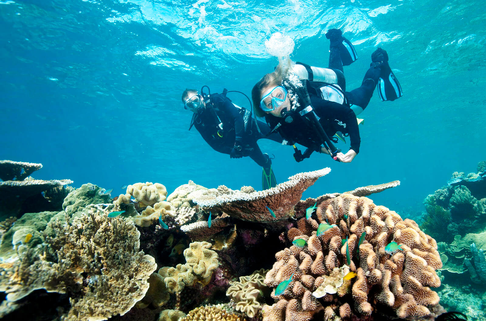 5ad6bfd98aafbbff645669e3_cairns-scuba-diving-moore-reef-sunlover-reef-cruises