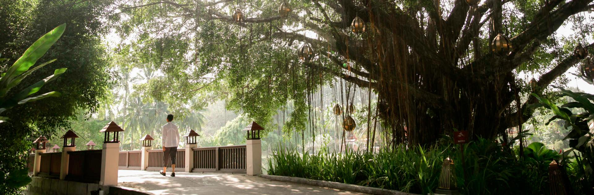 bt-spa-sanctuary-our-resort-hero_1920x633