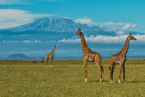 ASE Great Plains on safari oLDonyo Lodge Kenya