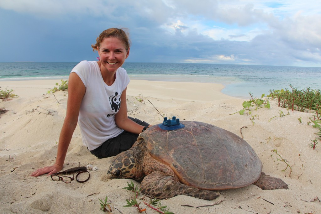 Christine Hof with hawksbill turtle, Milman Island, February 2017.