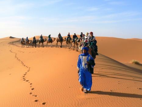 Peregrine Adventures-morocco_desert_berber-group-camels