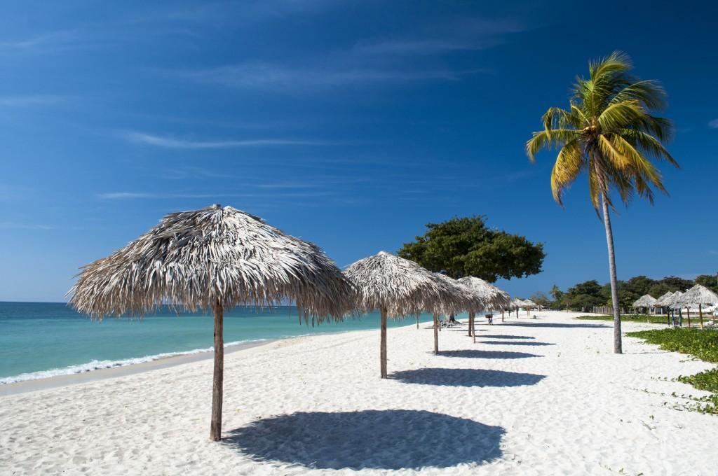 Beach umbrellas and coconut tree