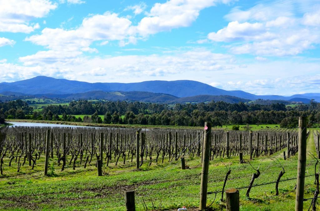 Vineyards at Yarra Valley
