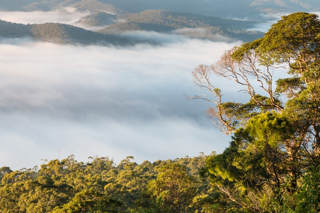 cloud inversion above tropical rainforest in Tamborine National Park
