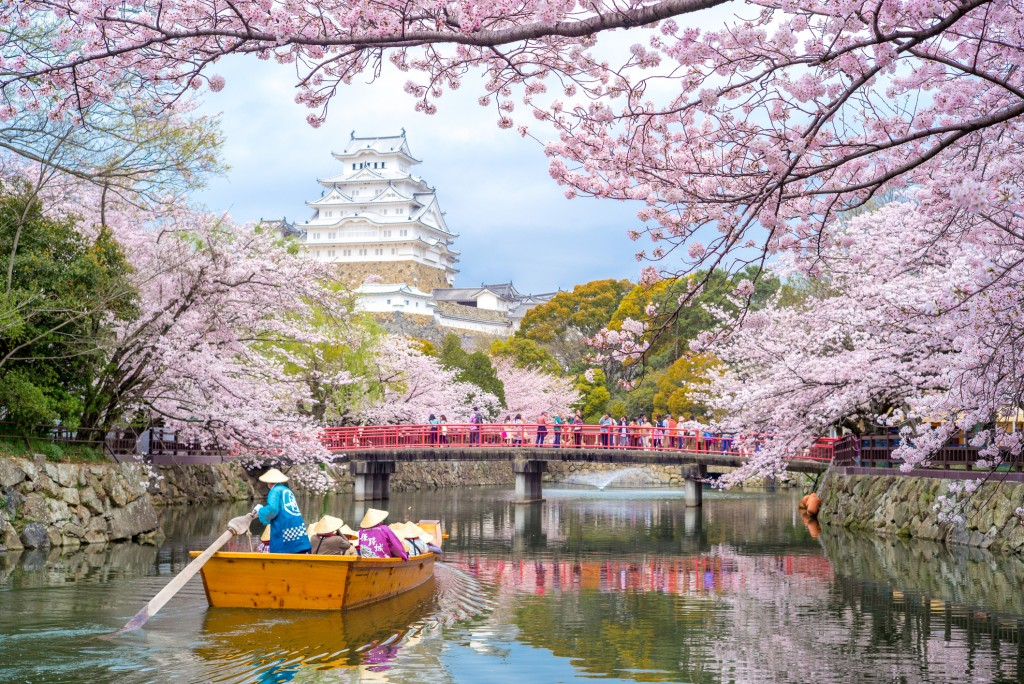 On Japan's southern islands of Okinawa, cherry blossoms open as early as January, while on the northern island of Hokkaido, the flowering can be as late as May. In most cities in between - Tokyo, Kyoto and Osaka - the cherry blossom season typically takes place in early April.