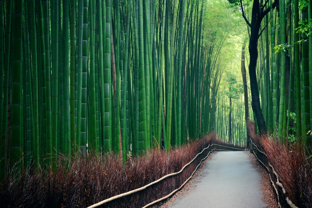 """'The winter storm Hid in the bamboo grove And quieted away.' - Bashō, """"The Winter Storm."""""""