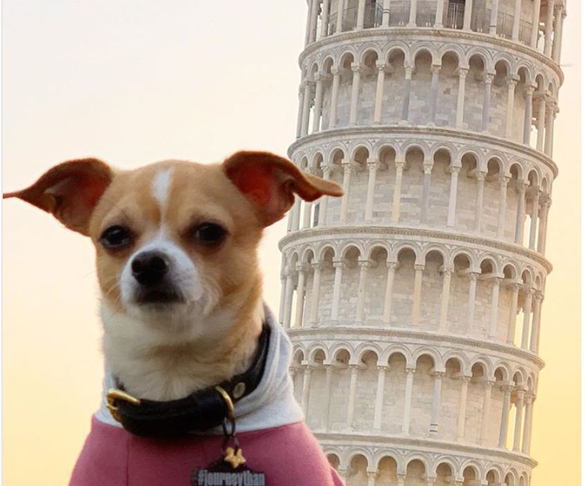 PICTURES: Meet the rescue dog who now travels the world