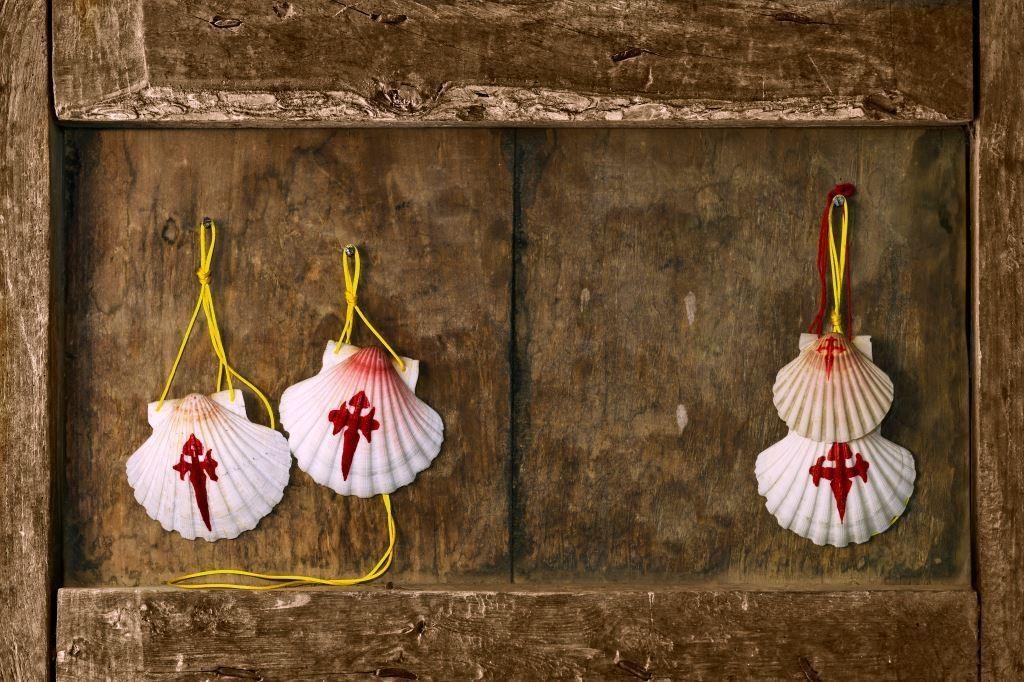 Shells _1110405380