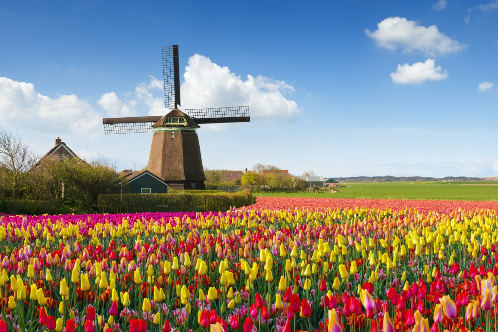 Dutch Spring scene with a windmill and colourful tulip fields under a nicely clouded sky