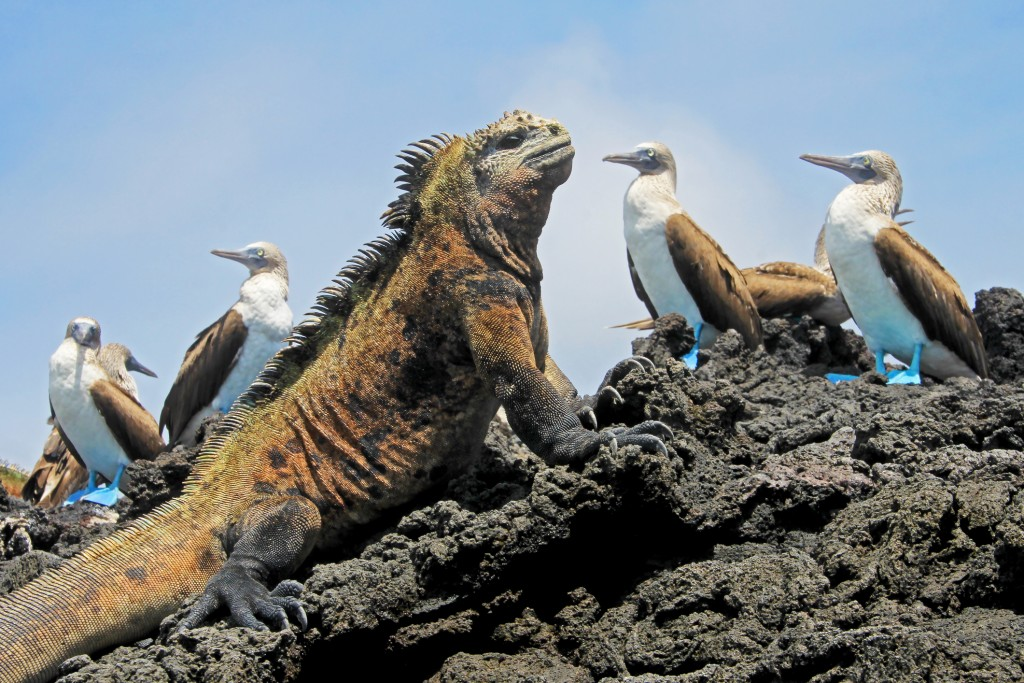 The Galpagos Islands: the volcanic home to marine iguana, the giant tortoise, blue-footed booby and a range of animals unique to the archipelago.