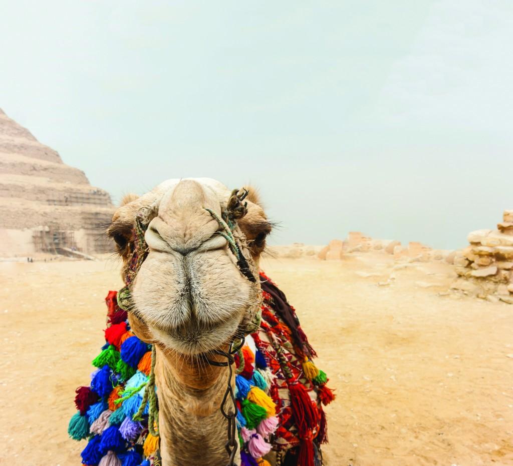 Camel_Egypt_ss_485440852
