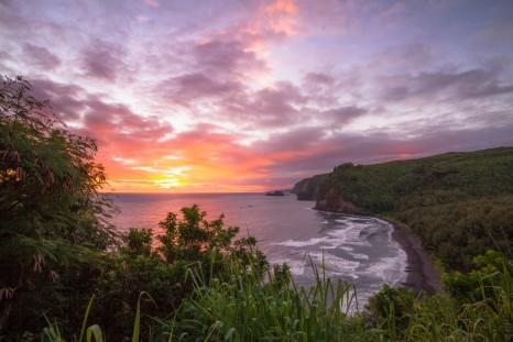 Aloha Fridays [5]