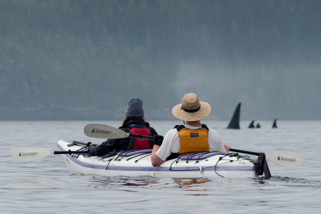 Kayakers Watching Orca in Johnstone Strait