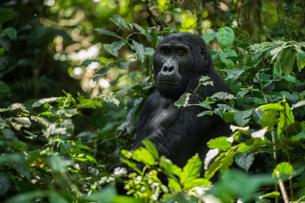 Adventure World Travel - Rwanda Wildlife Safari with Gorillas