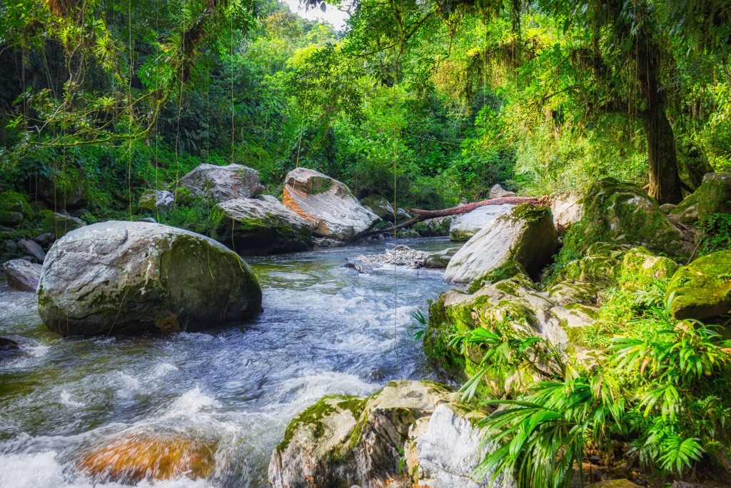 Sierra Nevada de Santa Marta Mountains, Colombia, South America.