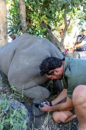 &Beyond Rhino
