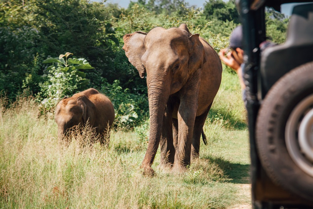 elephants on safari in National Nature Park Udawalawe in Sri Lanka