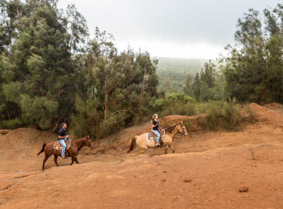 Horse riding at Four Seasons Lanai